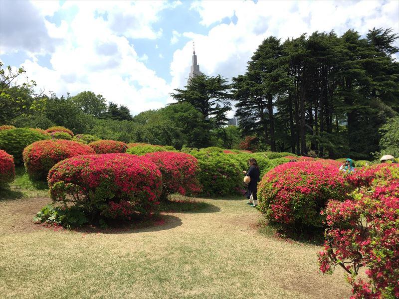 新宿御苑のツツジ山