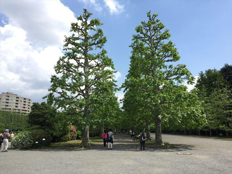 新宿御苑の整形式庭園の横にあるプラタナス並木