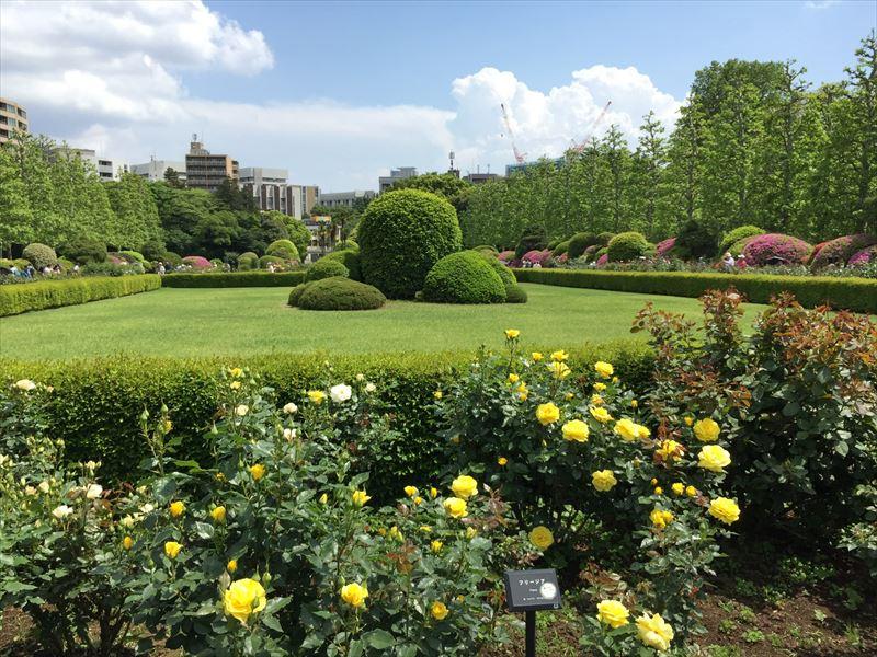 全部のバラの3割咲いていた新宿御苑のバラ花壇