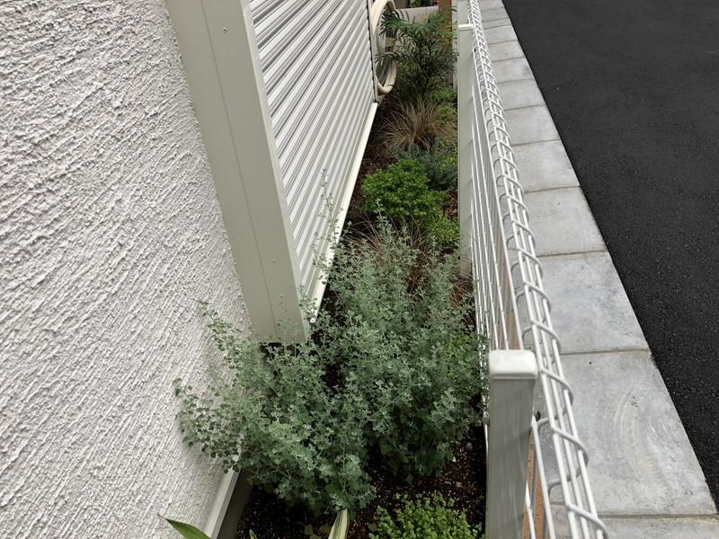 違う植物の列植で変化を楽しむ