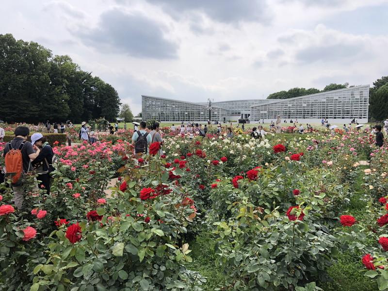 毎年春に開催されている神代植物公園のバラフェスタ