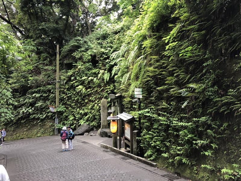 凄い世界観がある鎌倉銭洗弁天の入り口洞窟の壁面の植物