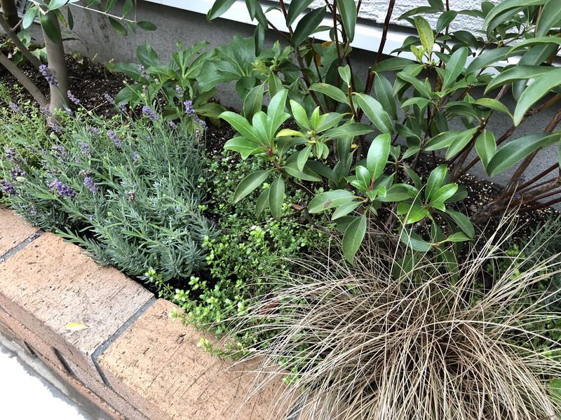 範囲を限定する植栽方法