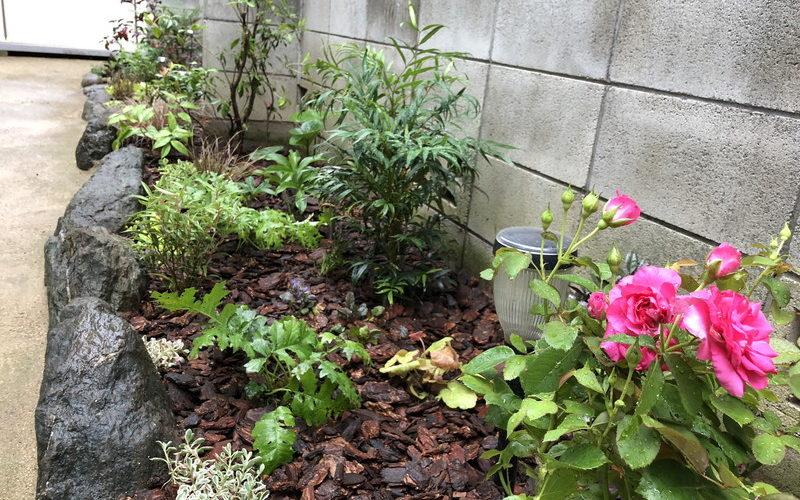 ドクダミで荒れていた日陰の花壇をリフォームして生まれ変わった花壇