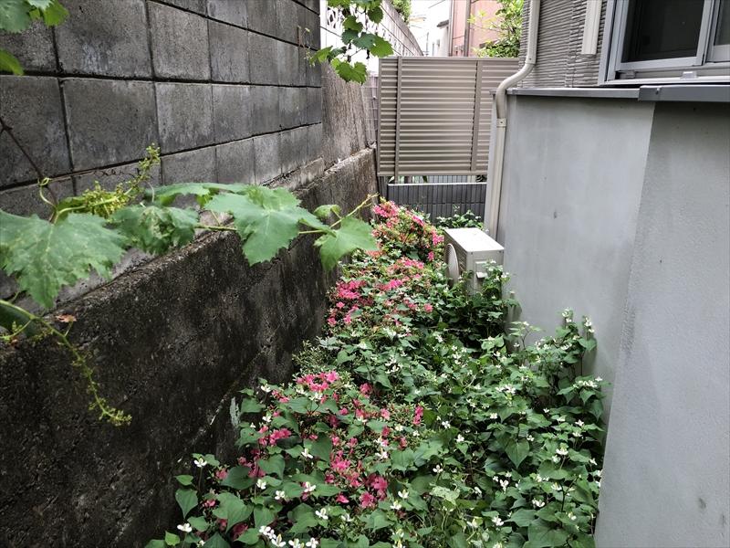 日陰でドクダミに覆われた世田谷区の手付かずのお庭