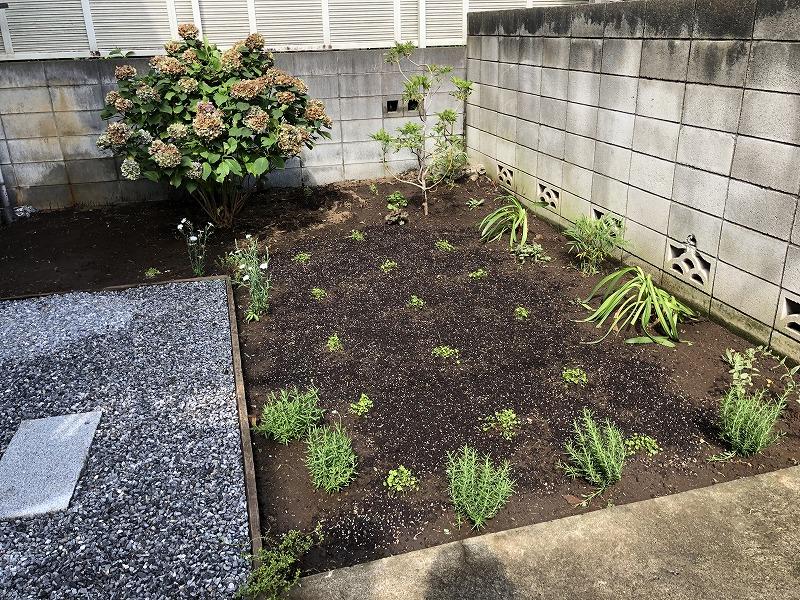 植栽工事が終わった世田谷区の個人邸の庭