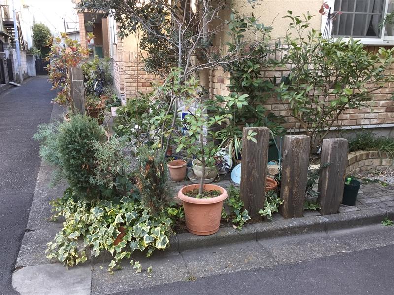 荒れ始めて手が付けれなくなってきた玄関前のお庭