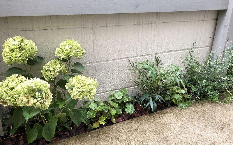 世田谷区の個人邸のシェードガーデンの植栽工事