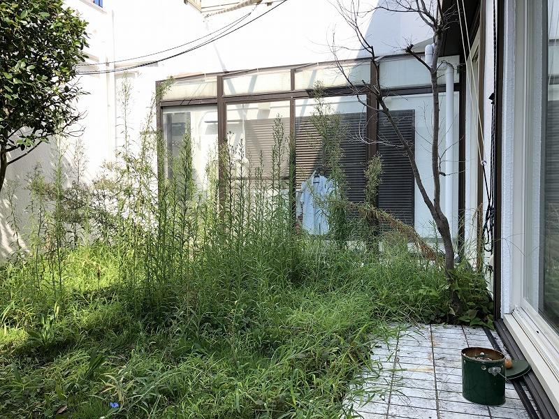 草刈りを行う前の雑草だらけのお庭