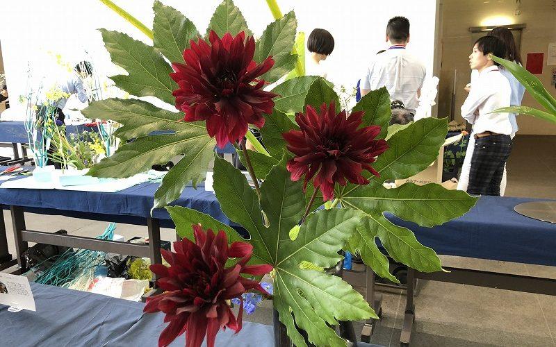 池坊東京会館で開催されている男花展のダリアの生け花