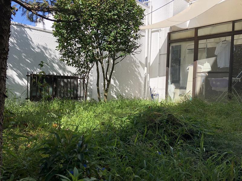 背の高い雑草だけ抜いた状態の横浜のお庭