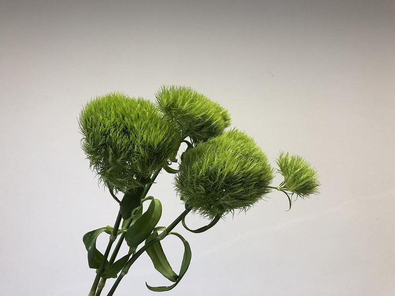 2019年の夏の男花展のための花材のてまり草