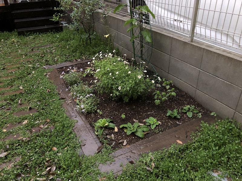武蔵野市で子供たちのために作られたお庭の小さな畑