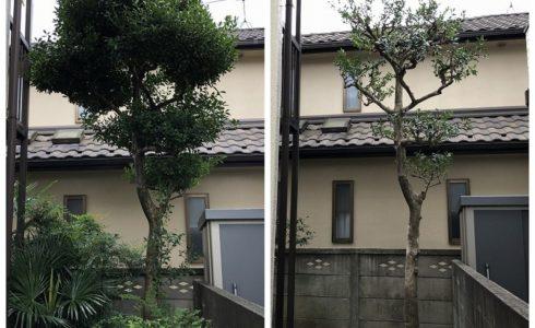 国分寺市のメンテナンスがいらない庭づくりのための剪定