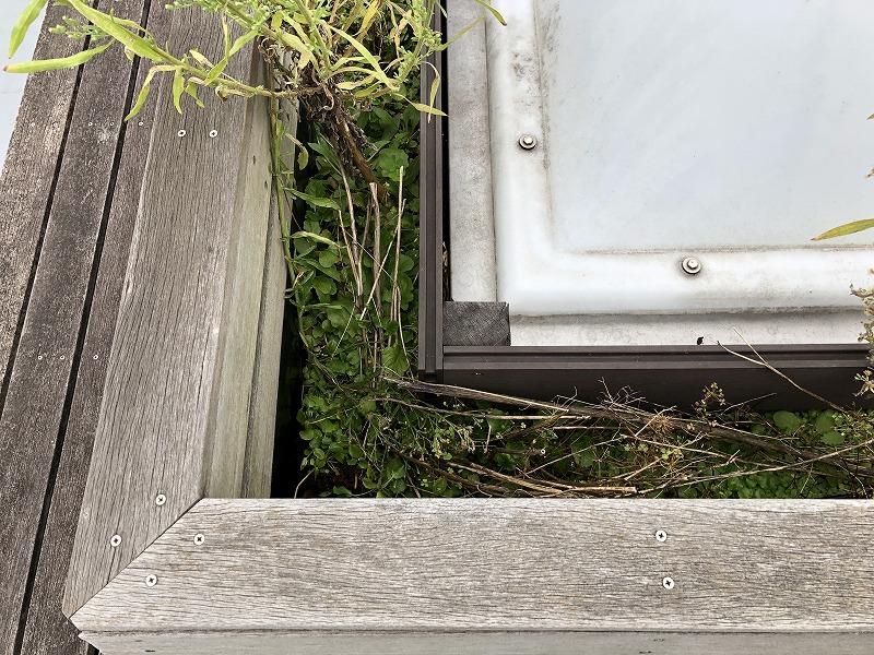 雑草でいっぱいになったぬかるみ状態の企業の屋上の緑化帯