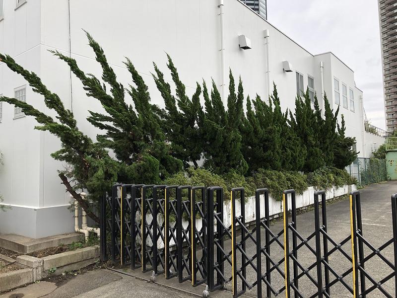 台風の影響を受けた企業の植物