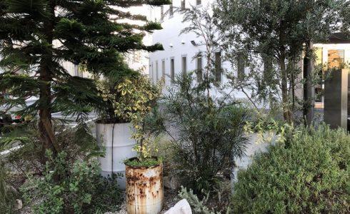 オーストラリアの植物で江東区の企業さんの植栽工事