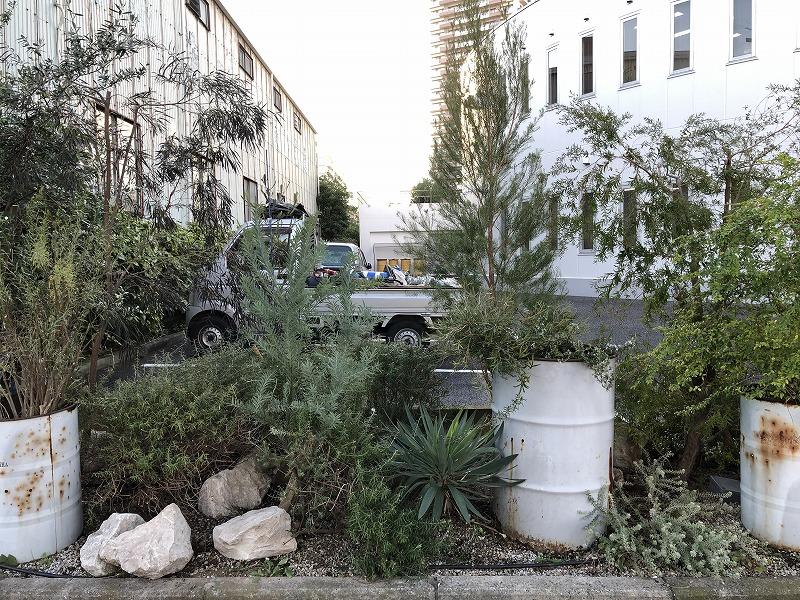 オーストラリア産の植物を植栽した江東区の企業の花壇