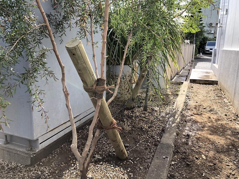江東区の企業での植栽で使用した添え木