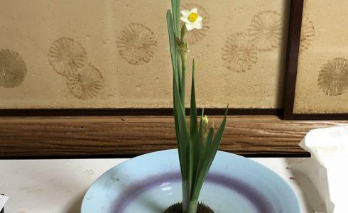 目黒教室の花がたりの先生がいけた池坊の伝花