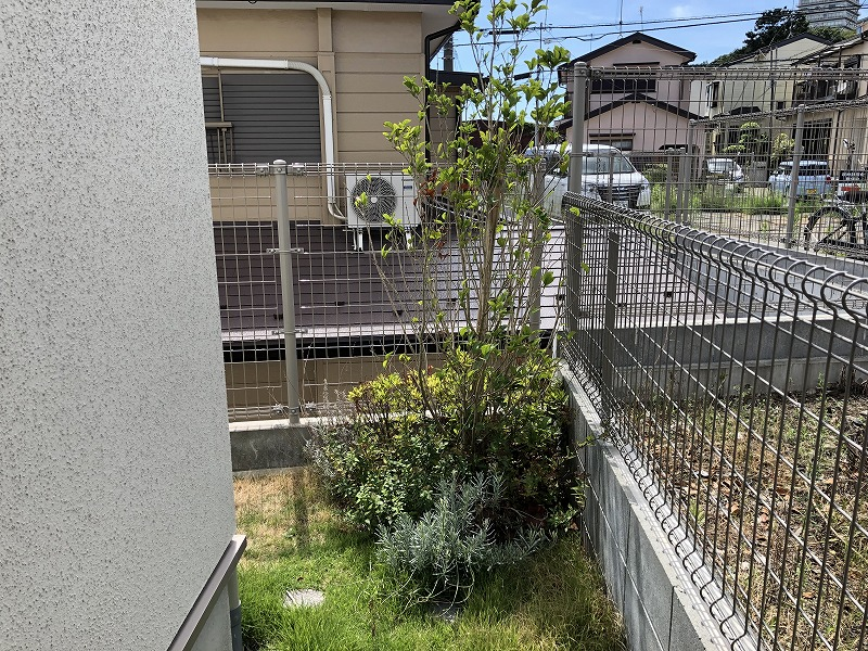 ひと夏を超えて緑がいっぱいになった新築住宅の植物