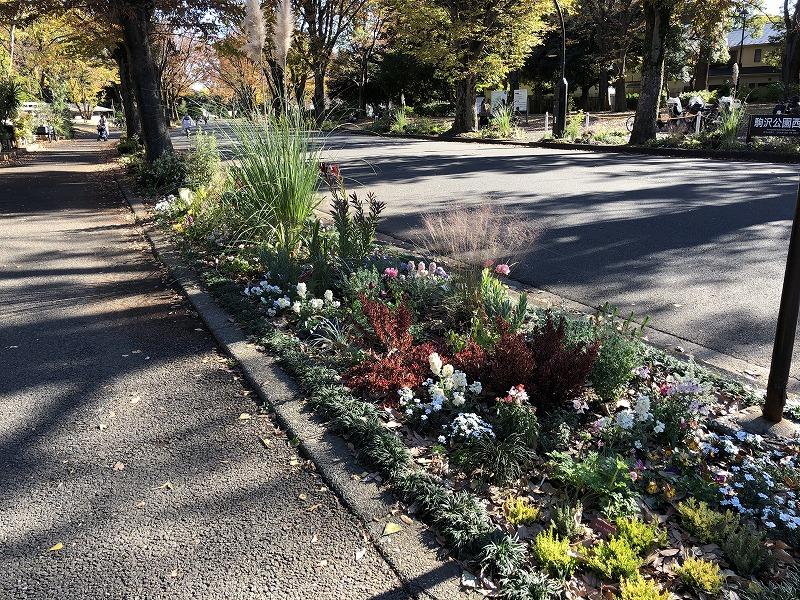 色合いが鮮やかな世田谷区と目黒区の公園の花壇植栽
