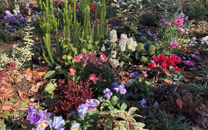 世田谷区と目黒区の公園で施工した季節の花の植栽