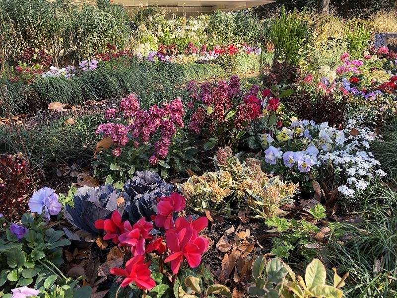 カラフルな色合いが鮮やかな公園の花壇