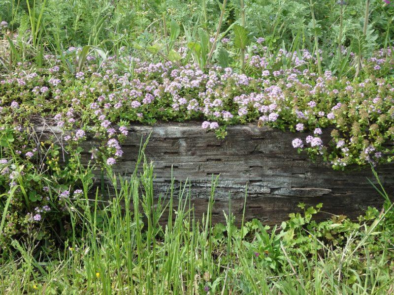 自然と溶け合った枕木の花壇