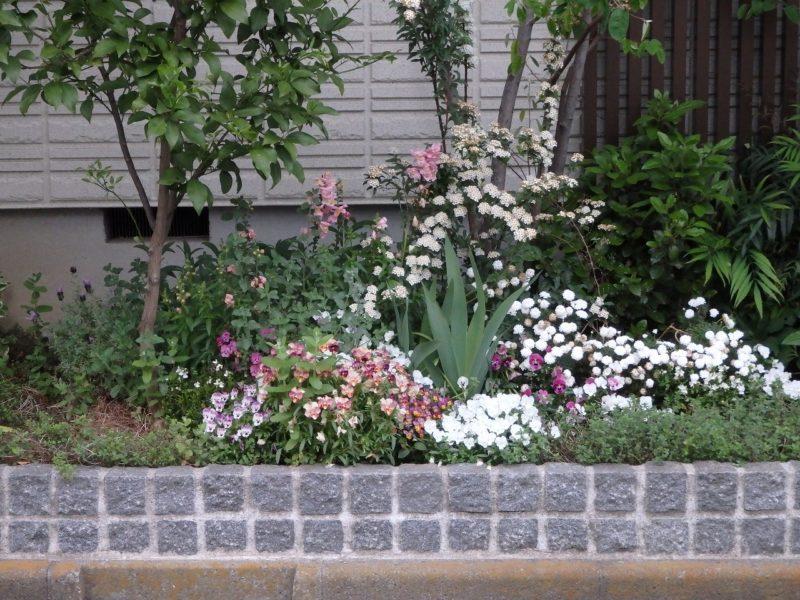 最近の建売住宅でよく見かけるピンコロの花壇