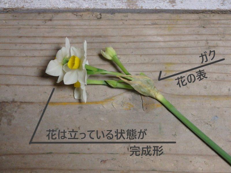 水仙の花の部分の説明