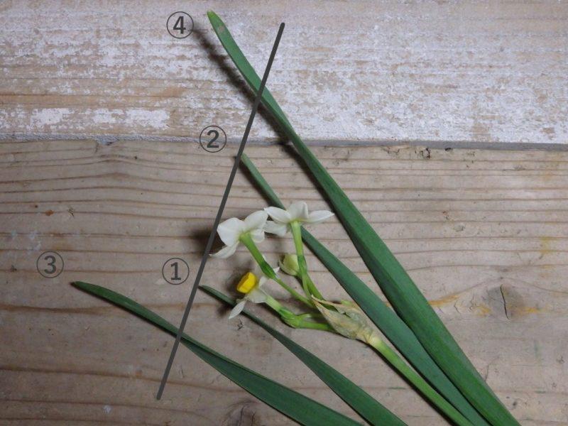 水仙の組み立ての花の位置