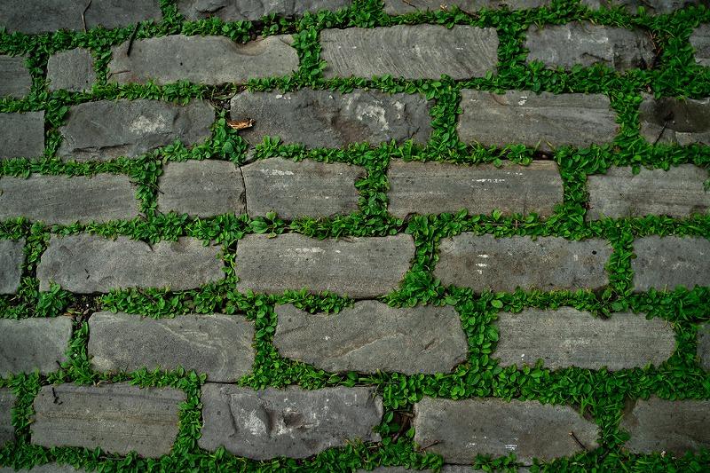 隙間にブランドカバーの植物が定着したレンガの道