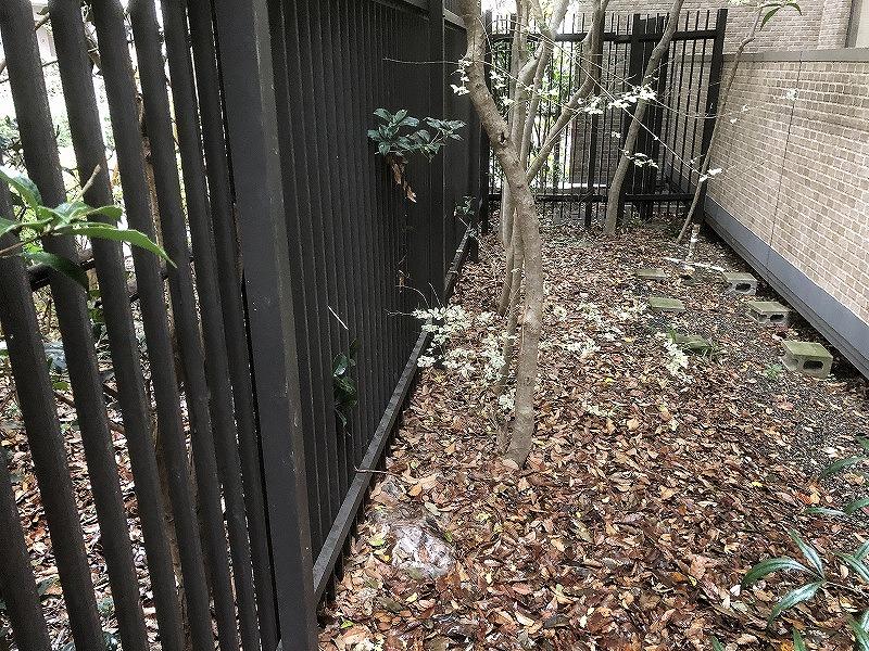 落ち葉や樹形が乱れた樹木があるお庭