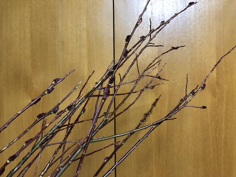 枝の乱れっぷりが魅力の黒目柳