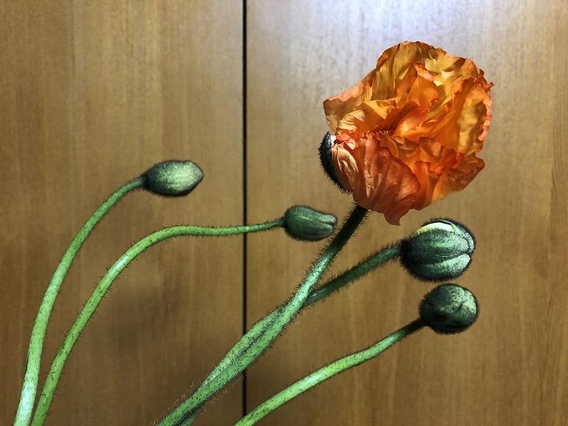 大きい花とつぼみが印象的なポピー