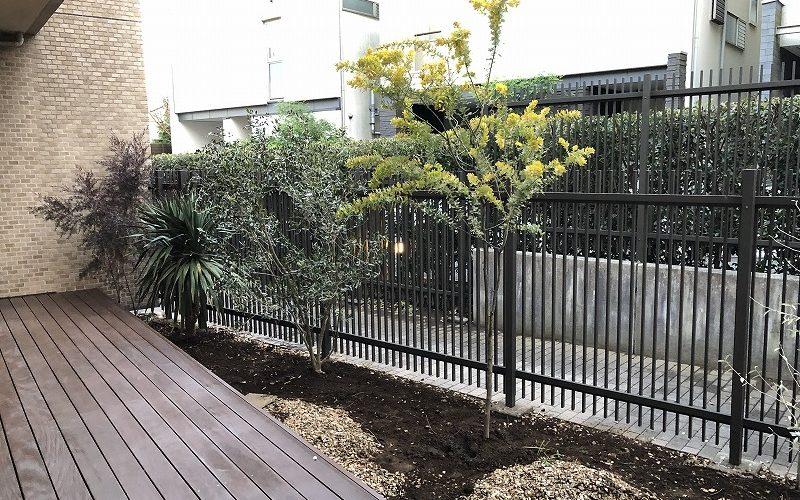 オーストラリア産の樹木の植栽