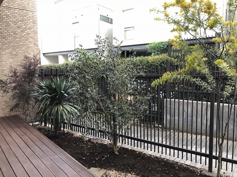 オーストラリア産の樹木を主としたお庭づくり