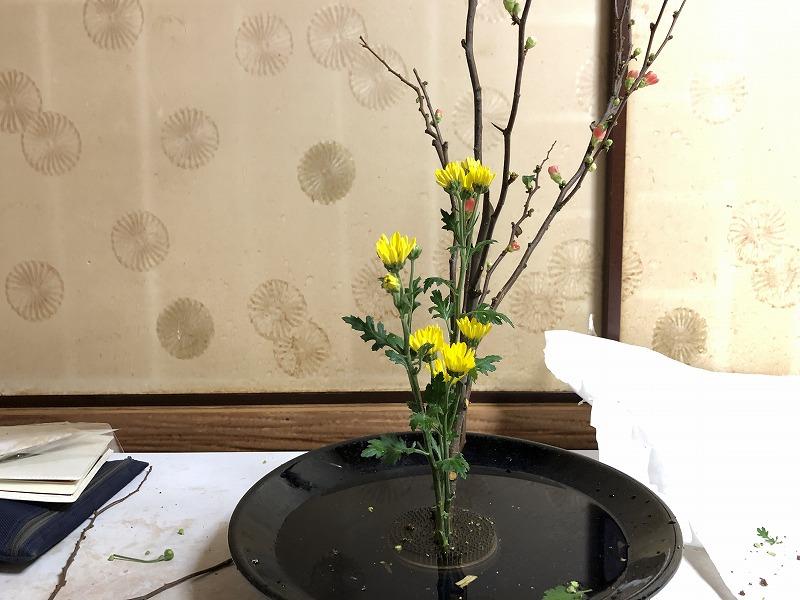 すっきり整理整頓された体の位置の小菊