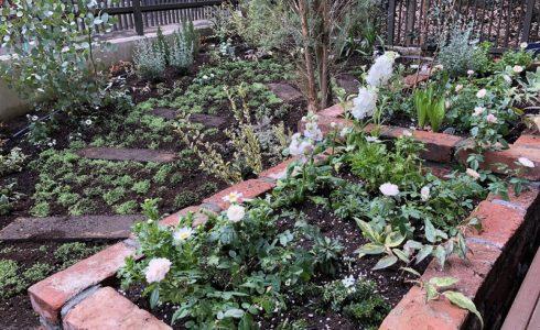 完成まじかの世田谷区のナチュラルガーデンの庭づくり
