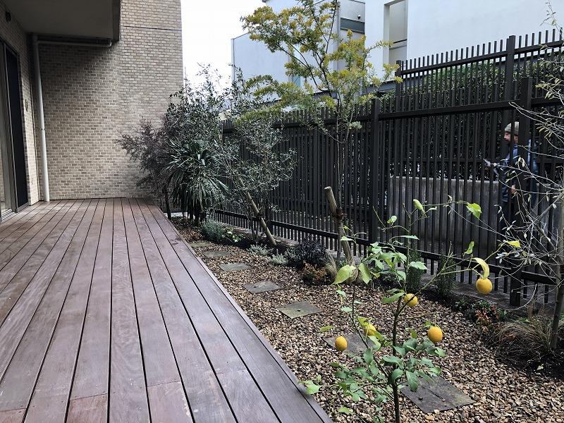 南側の植栽樹木はオージープランツなどの乾燥系