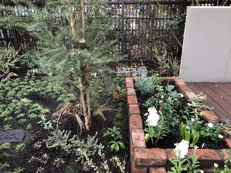 レンガの花壇とメラレウカ