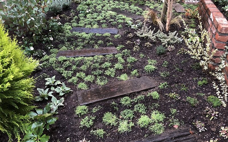 世田谷区のナチュラルガーデンの庭づくりで植栽した色んなグランドカバー