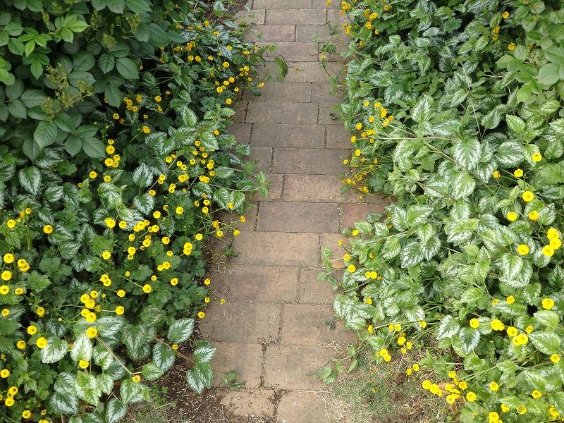 植物に囲まれたレンガの小道