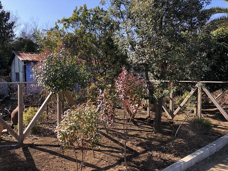 流行っている樹木をしっかり管理してる埼玉の植木屋