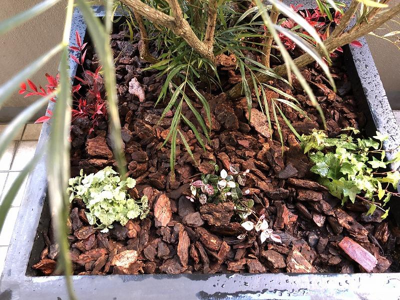 バークチップを敷いた目隠しプランターの植栽