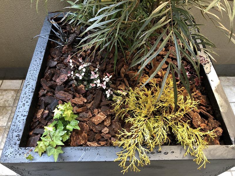 世田谷ガーデンのナチュラルガーデンの庭