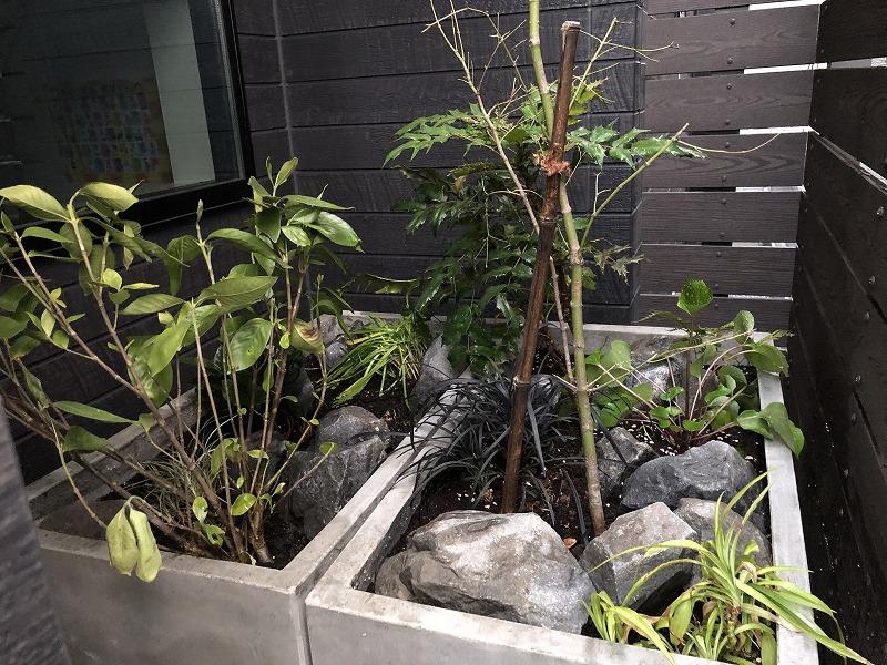 千葉県の新築住宅でプランターで目隠しを行った植栽