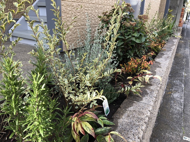 世田谷区のマンションの冬の植栽工事