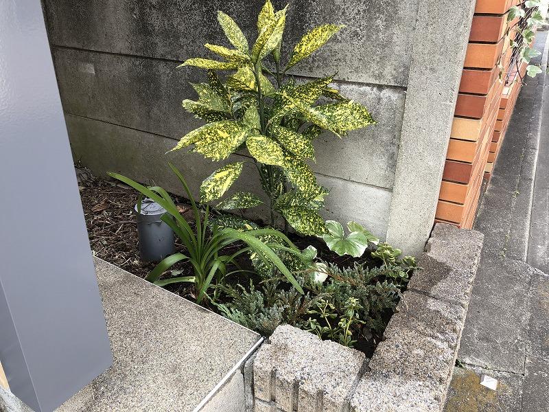 乾燥や半日陰に強い植物で世田谷区のマンション花壇の植栽